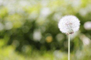 Allergy Tips