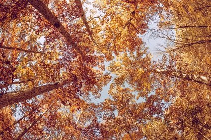 symptoms-and-causes-of-fall-allergies