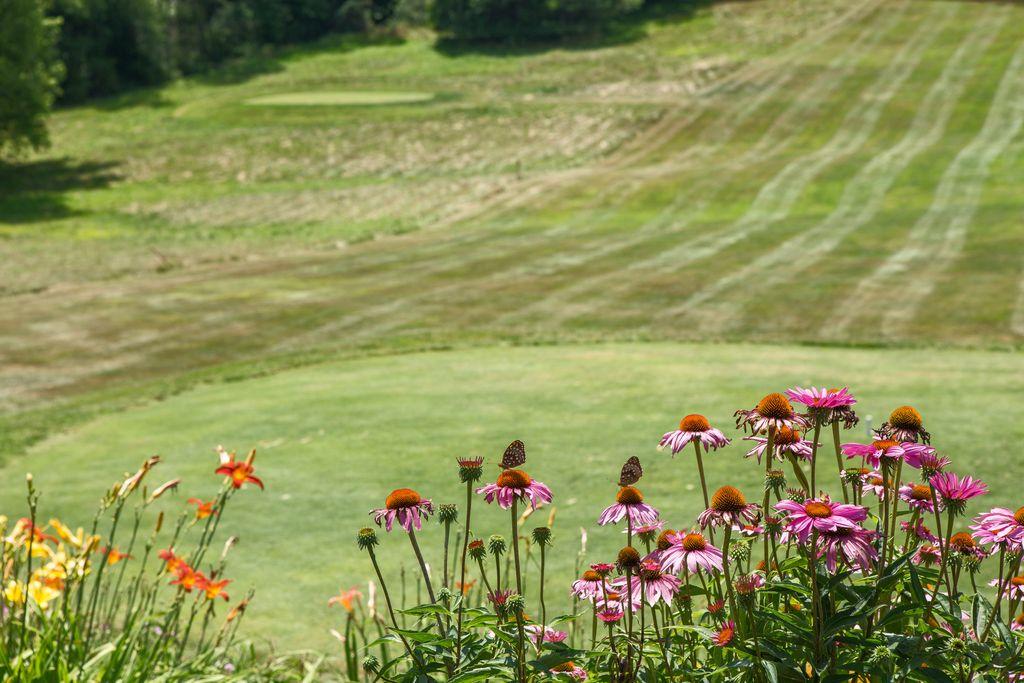 Flowers on Golf Green