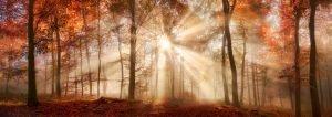 Sunlight Radiating Through Forest Trees